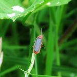 Bug, Everdon