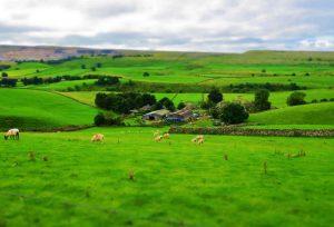 Farm, Horton